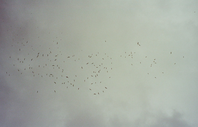 Vultures over Rio, 2013