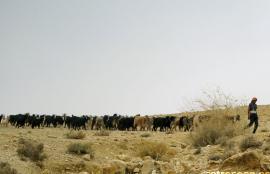 Wadi Al Mujib, Al Hidan 2008