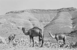 Dhiban, Jordan 2006
