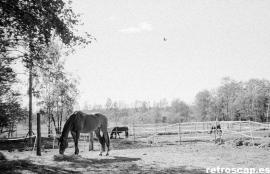 Horse Riding Club, Espoo, May 2011