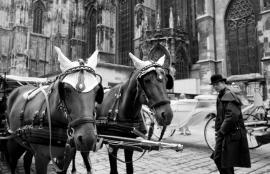 Medieval Vienna in 2011