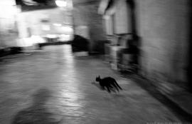 Night spirits, Kotor, Montenegro 2011