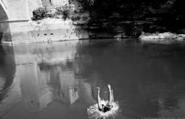 Dive #2, Mostar 2011