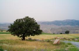 Jalaad, Al-Salt 2012