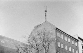 Tree, Prenzlauer Berg 2012
