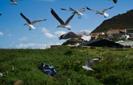 The birds, Hout Bay, Cape Town 2012