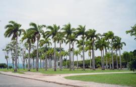 Palmy in Rio de Janeiro #1, 2013