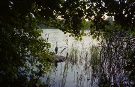 Stork, Weißer See, Berlin 2013