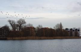 Rummelsburger See, Berlin 2014