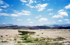 Arabah وادي عربة 2016